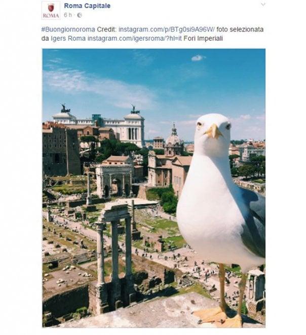 Roma, foto di un gabbiano sul profilo Facebook del Comune, utenti all'attacco. Poi arrivano le scuse