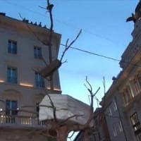 Roma,  in largo Goldoni spuntano gli alberi-sculture di Penone