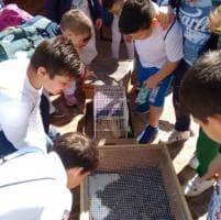 A Panicale  è l'ora di Mielamore, il progetto solidale dedicato al mondo delle api