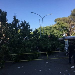 Roma, cade un albero in via Nomentana: illesi i passanti