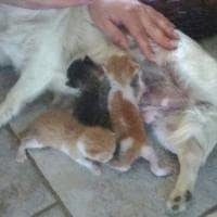 Tivoli, la cagnetta trova tre gattini in un sacco li salva e li allatta