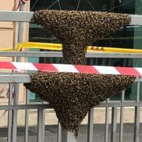 Roma, api in piazza Fiume: un alveare sulla ringhiera del sottopassaggio