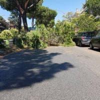 Roma, cade ramo in via Virginia Agnelli