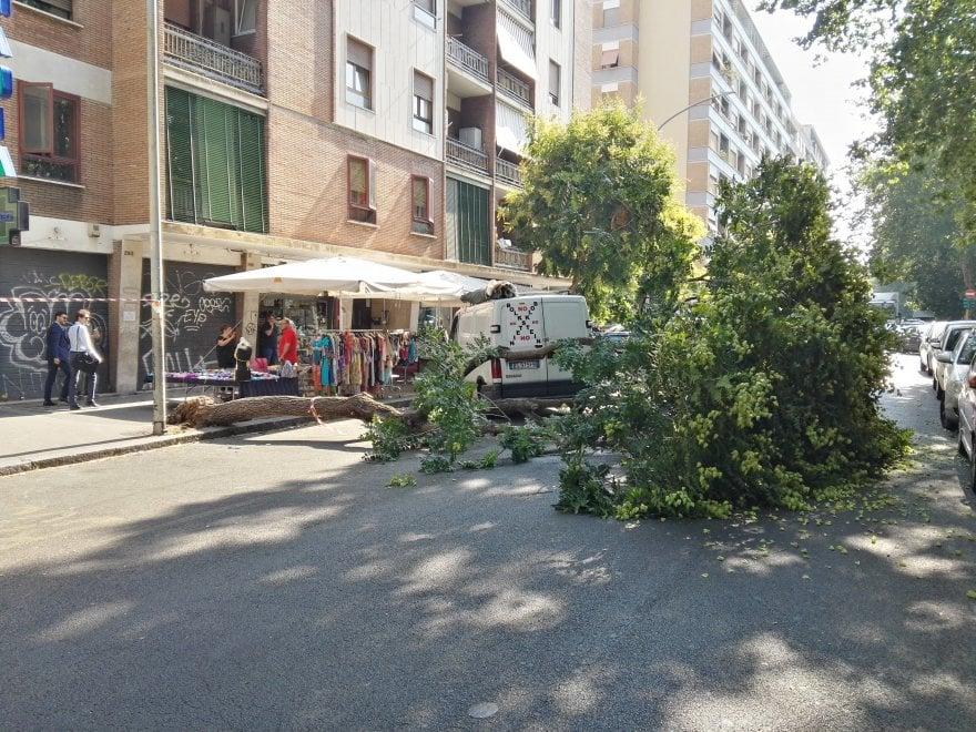 Roma, cade un albero in circonvallazione Ostiense: strada chiusa e bus deviati