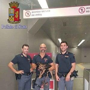 Roma, cane finisce sui binari della metro B: salvato dalla polizia