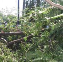 Roma, cade grosso ramo di albero in via Cola di Rienzo: grave un anziano