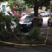 Roma, cade albero in piazza Ledro: nessun ferito
