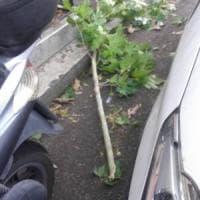 Roma, ramo crolla su una donna in scooter: ferita lievemente