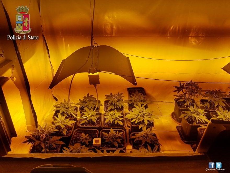 Roma, marijuana, il boom delle coltivazioni fai-da-te
