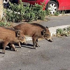 Roma, la capitale è uno zoo ma il bando per la fauna selvatica è congelato