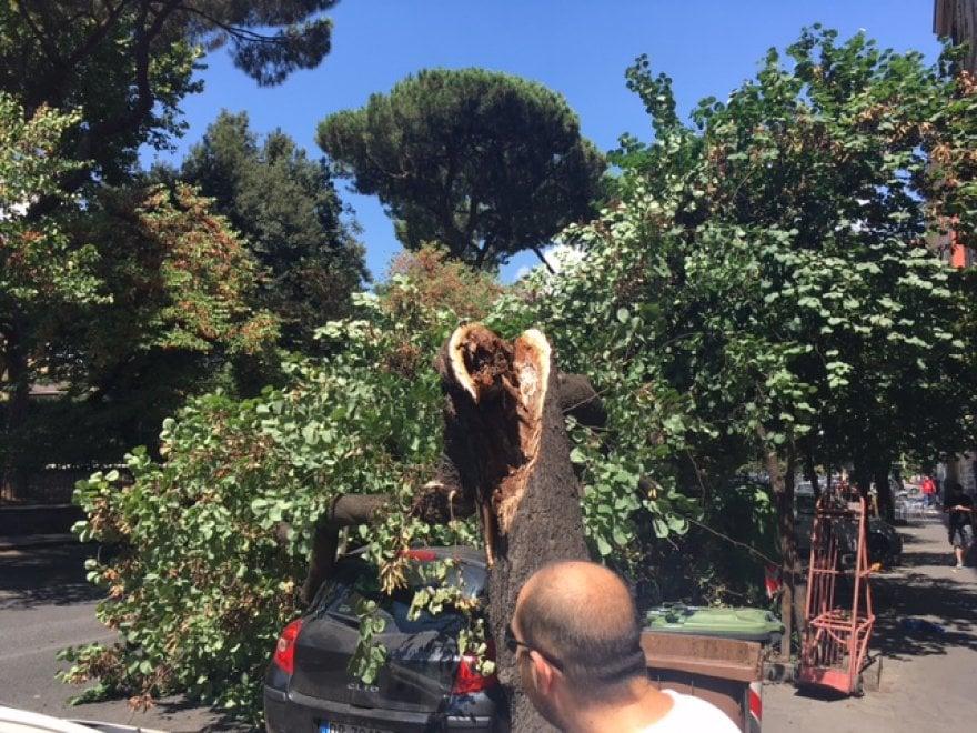 Roma, San Lorenzo: albero si schianta su un'auto in via Tiburtina