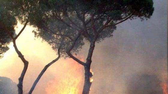Roma, rogo a Castel Fusano: chiusa via Colombo, evacuate case. Ipotesi dolo, fermato un uomo