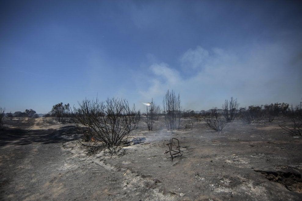 Incendio a Castel Fusano, le immagini della pineta distrutta
