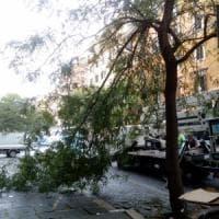 Roma, grande ramo si stacca da un albero all'Esquilino