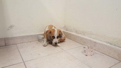 Vagava sull'A1 tra Frosinone e Anagni  foto  cane salvato dalla polizia e affidato all'Enpa