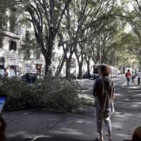 Roma, ramo cade sui cavi del tram a San Lorenzo: linee bloccate per quattro ore