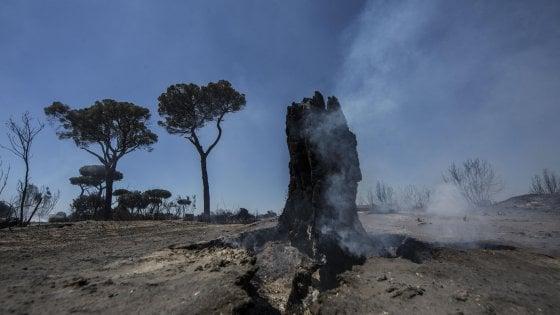 Castel Fusano, arrestato incendiario: stava appiccando il fuoco nella pineta