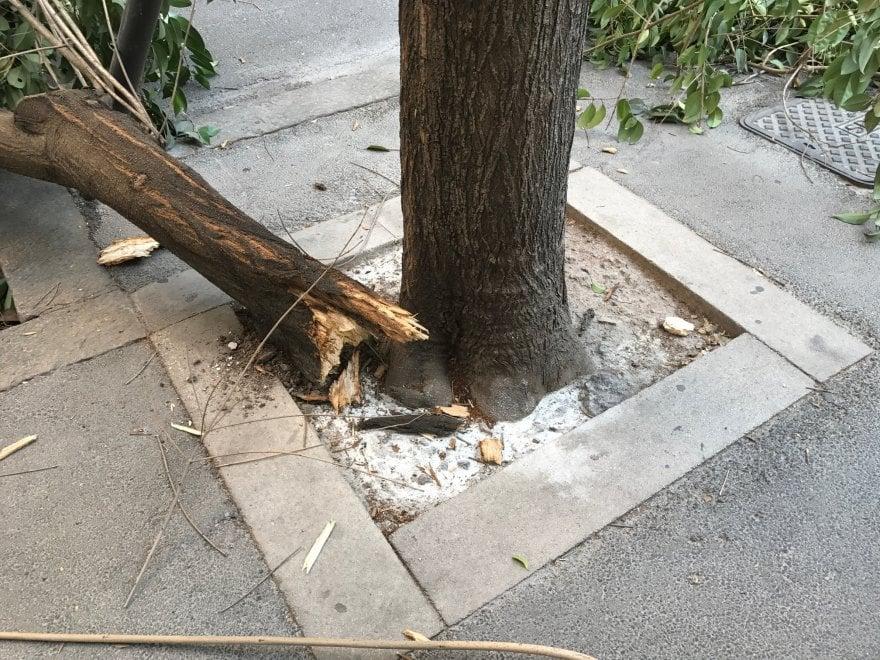 Roma, un albero si spezza a metà in via Pisanelli al Flaminio. Strada transennata