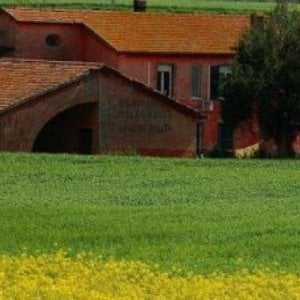 """Roma, Raggi: """"A Castel di Guido e Tenuta del Cavaliere stop agli allevamenti intensivi di animali"""""""
