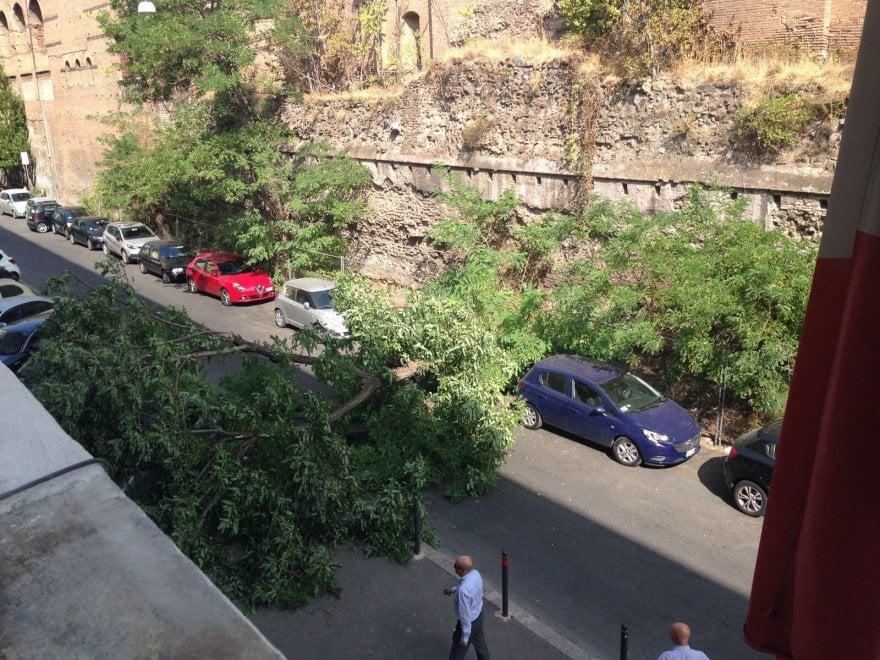 Roma, albero crolla davanti al liceo Righi: nessun ferito