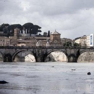 """Roma, l'allarme di Marevivo: """"Nel Tevere moria di pesci"""""""