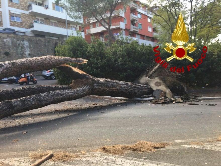 Roma, pino cade in via Cassia: feriti un uomo e una donna