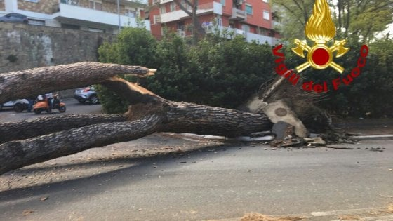 Pino crolla sulla Cassia, due feriti e auto distrutte