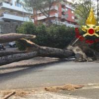 Roma, albero crolla su due automobili sulla Cassia: due feriti