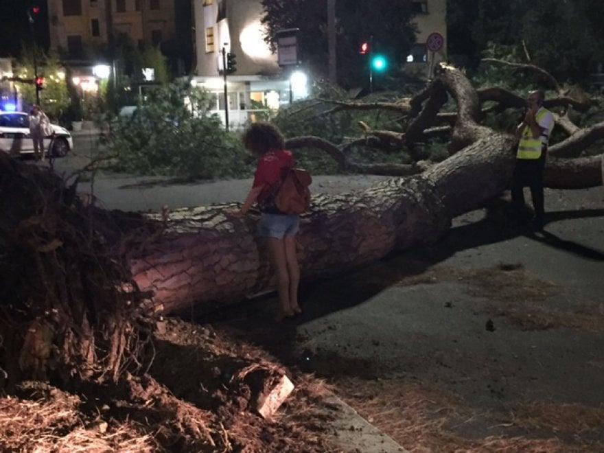 Roma, un pino crolla in viale Mazzini: strada bloccata, ma nessun ferito