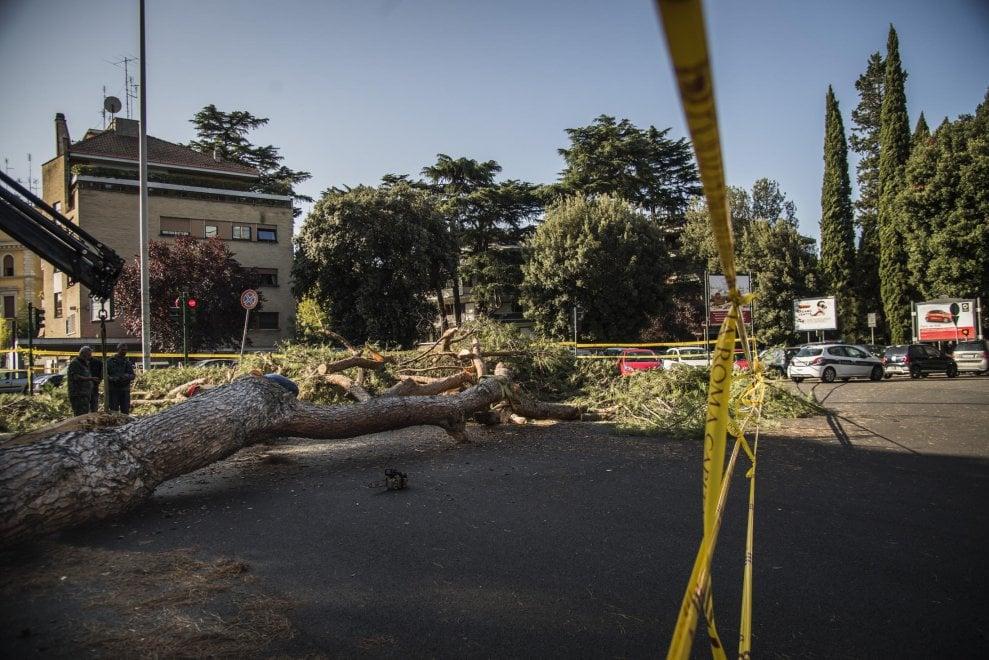Roma, viale Mazzini bloccata per ore a causa dell'albero caduto