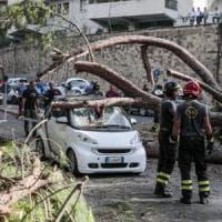 Roma, emergenza verde: il censimento non fermerà la strage di alberi