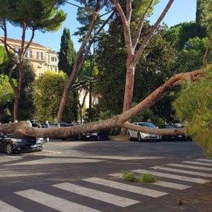 Roma, pino cade su auto in piazzale Marina, nessun ferito