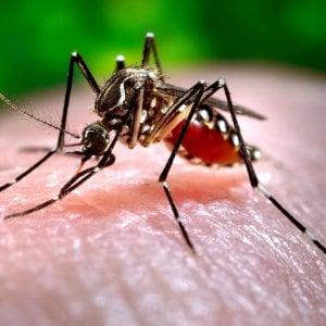 """Chikungunya a Roma, i casi salgono a 27. Stop alle donazioni, Zingaretti: """"Non ci sarà carenza di sangue"""""""