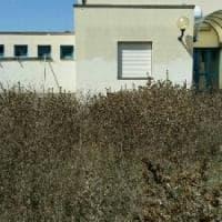 Roma, tutti a scuola ma con i topi e senza banchi: sos dei genitori