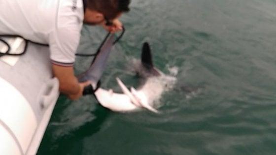 """Paura a Scauri: """"C'è uno squalo vicino alla riva"""". Recuperato dalla guardia costiera e portato al largo"""