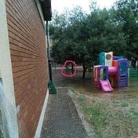 Roma, volpi nel giardino della scuola: i bambini costretti a stare in aula