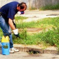 Chikungunya, altri undici casi nel Lazio: quattro sono a Roma