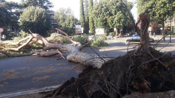 """Roma, strade sporche e alberi che cadono: """"Esposto in Procura contro la sindaca"""""""