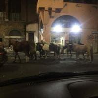Roma, cavalli scappano dal maneggio e galoppano in strada: notte da far west a Montesacro