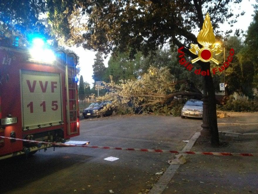 Roma, albero cade a Monte Oppio, danneggiate due auto. Nessun ferito