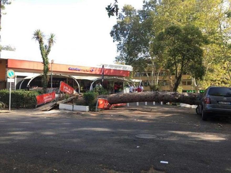 Roma, crolla un pino al Villaggio Olimpico davanti a supermercato: danneggiate 4 auto