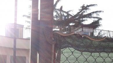 Paura a Testaccio: c'è un serpente davanti  al nido. Le mamme lanciano l'allarme