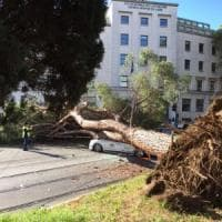 Roma, paura a Prati: un albero si schianta su un taxi: autista ferito