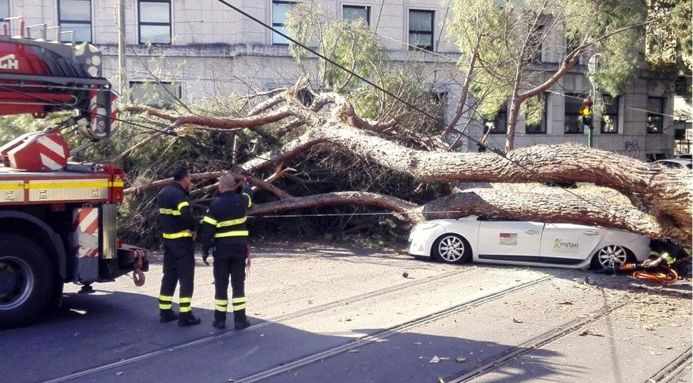 Roma, crolla albero in Prati: colpito taxi, l'autista in ospedale