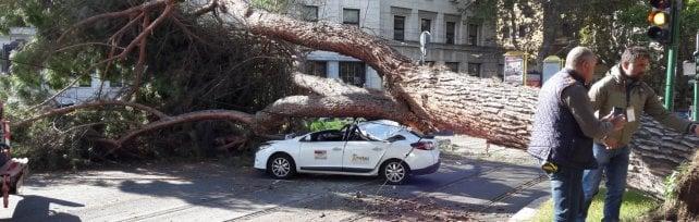 Roma, albero crolla in zona Prati e distrugge taxi: autista ferito