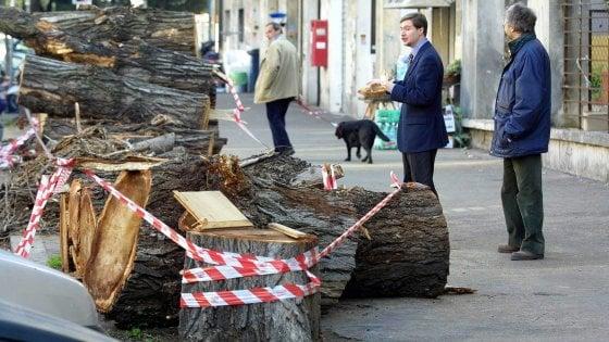 """Strage d'alberi, Roma in tilt: """"Poche cure e tanti scavi ecco perché crollano"""""""