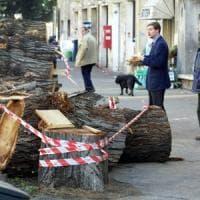 Strage d'alberi, Roma in tilt: