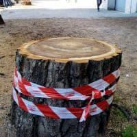 Emergenza alberi Roma, le dieci cose da sapere