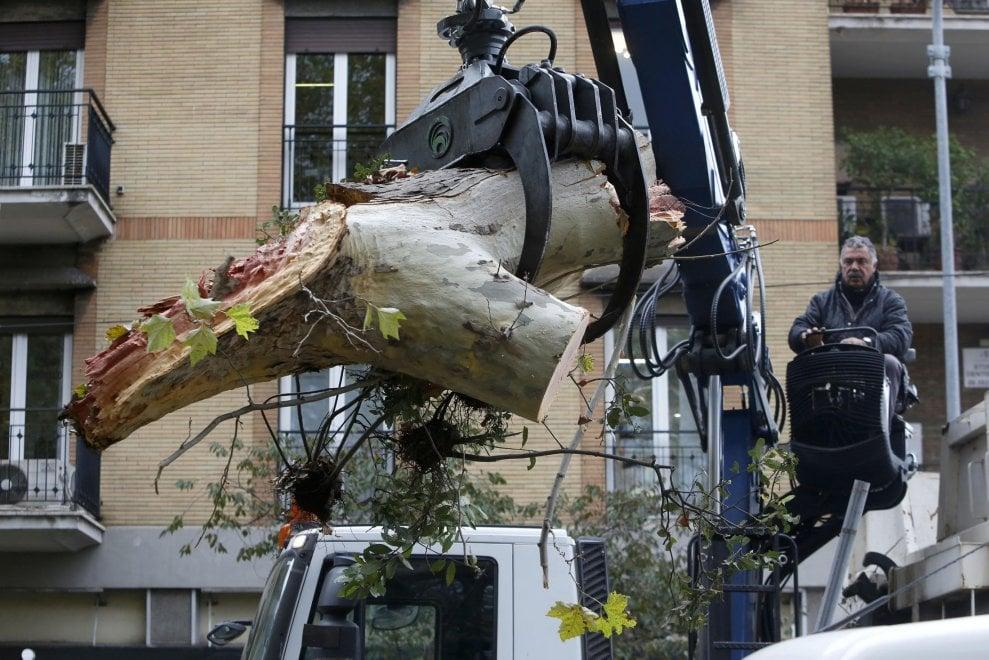 Roma, un platano si schianta sulla circonvallazione Gianicolense. Danneggiati i cavi del tram 8