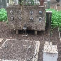 Roma, il cimitero del Verano invaso dal guano: